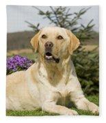 Yellow Labrador Fleece Blanket