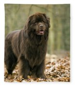 Newfoundland Dog Fleece Blanket