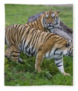 Siberian Tigers, China Fleece Blanket