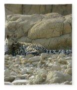 Arabian Leopard Panthera Pardus Fleece Blanket