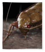 Bedbug Cimex Lectularius Fleece Blanket