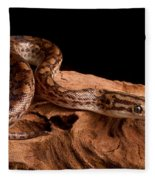 Colombian Rainbow Boa Epicrates Maurus Fleece Blanket