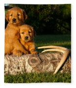 Golden Retriever Puppies Fleece Blanket