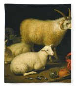 A Barn Interior With A Four-horned Ram And Four Ewes And A Goat Fleece Blanket