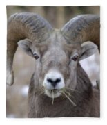 A Big Ram Caught With His Mouth Full Fleece Blanket