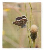 A Brown Argus On Stem Fleece Blanket