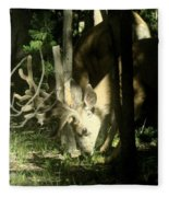 A Buck Deer Grazes Fleece Blanket
