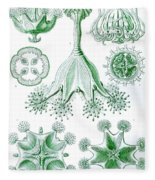 A Collection Of Stauromedusae Fleece Blanket