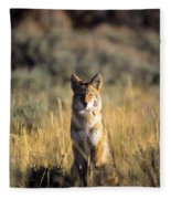 A Coyote Canis Latrans Stares Fleece Blanket