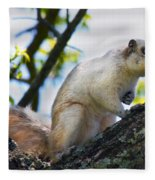 A Fox Squirrel Pauses Fleece Blanket