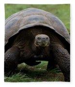 A Giant Tortoise Walks Along The Rim Fleece Blanket