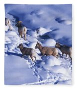 A Group Of Bighorn Sheep Ovis Fleece Blanket