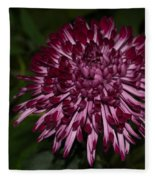 A Happy Birthday Wish With An Elegant Maroon And Pink Mum Fleece Blanket