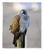 A Hawk On A Fence Post  Fleece Blanket