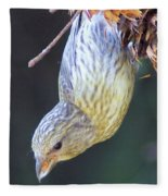 A Little Bird Eating Pine Cone Seeds  Fleece Blanket