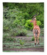 A Male Impala In Lake Manyara National Park. Tanzania. Africa. Fleece Blanket