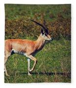 A Male Impala In Ngorongoro Crater. Tanzania Fleece Blanket
