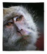 A Monkey's Look Fleece Blanket