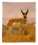 A Pronghorn Gazes Fleece Blanket