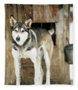 A Sled Dog Stands By Its Kennel Fleece Blanket