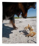 A Small Dog Fights With A Crab Fleece Blanket
