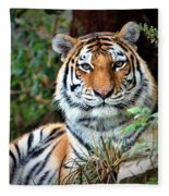 A Tigers Glance Fleece Blanket