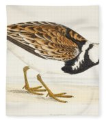 A Turnstone. Arenaria Interpres. From A Fleece Blanket