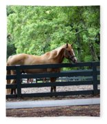 A Very Beautiful Hilton Head Island Horse Fleece Blanket