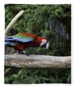 A Very Colorful And Bright Macaw Bird Perched On A Branch Fleece Blanket