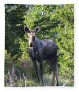 A Young Moose  Fleece Blanket
