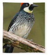 Acorn Woodpecker Melanerpes Fleece Blanket