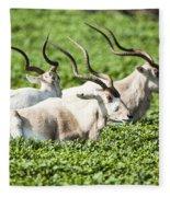 Addax Nasomaculatus Fleece Blanket