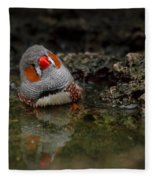 Adorable Zebra Finch Taking A Bath Fleece Blanket