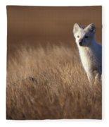 Adult Arctic Fox On The Tundra In Late Fleece Blanket