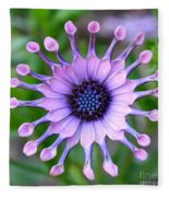 African Daisy - Square Format Fleece Blanket