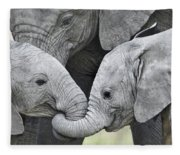African Elephant Calves Loxodonta Fleece Blanket