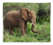 African Elephant Grazing Serengeti Fleece Blanket