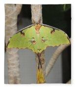 African Moon Moth Fleece Blanket
