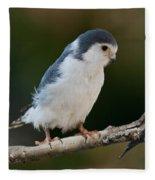 African Pygmy Falcon Fleece Blanket