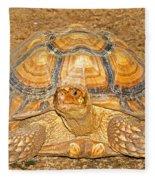 African Spur Thigh Tortoise Fleece Blanket