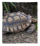 African Spurred Tortoise Fleece Blanket