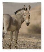 African Wild Ass Equus Africanus Fleece Blanket