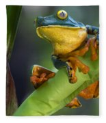 Agalychnis Calcarifer 4 Fleece Blanket
