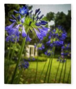 Agapanthus In The Garden Fleece Blanket
