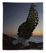 Ahinahina - Silversword - Argyroxiphium Sandwicense - Summit Haleakala Maui Hawaii Fleece Blanket