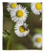 Alabama Wildflower Robin's Plantain - Erigeron Pulchellus Fleece Blanket