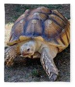 Aldabra Tortoise Fleece Blanket