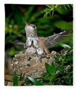 Allens Hummingbird Chicks Fleece Blanket