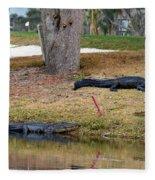 Alligator Hazard Fleece Blanket