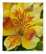 Alstroemerias Flower 1 Fleece Blanket